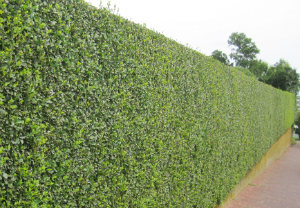 Hedge Cutting W7